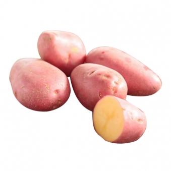 [여름한정] 포근포근 맛있는 홍감자 (3kg/5kg/10kg) (업체별도 무료배송)