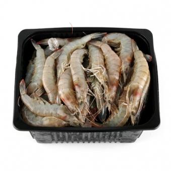 [주말특가] 갓 잡아올린 생물 왕새우 1kg(41~49미) (업체별도 무료배송)